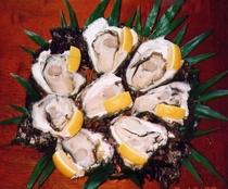 天然岩牡蠣貝