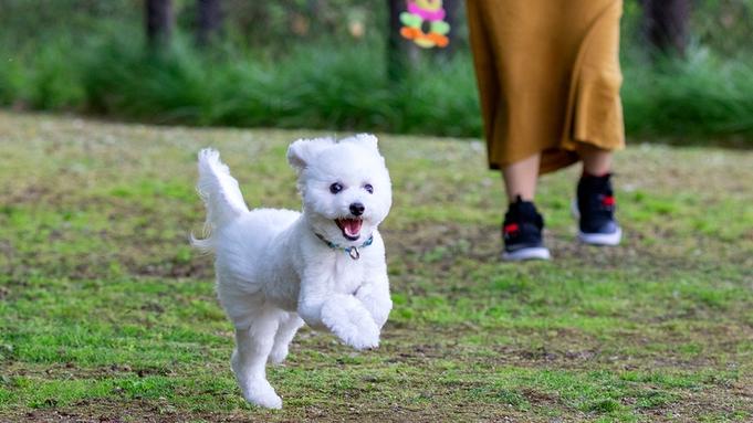 【きたゆざわの大きなキャンペーン】<愛犬と一緒>3つのホテルで使える「きたゆざわ券」どう使う?