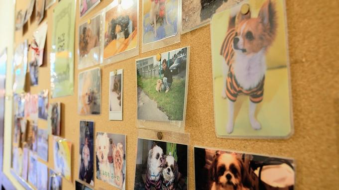 【夏旅セール】ワンちゃん洋室〜ペット同室宿泊可♪愛犬と温泉旅行満喫プラン