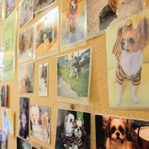 【ワンちゃん写真コーナー】ロビーにはお客様が送ってくださったワンちゃんの写真がいっぱい