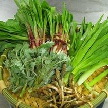 裏山で採れた春山菜。天ぷらや卵とじに
