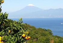 蜜柑山から富士山