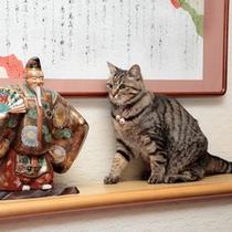 看板猫 親子猫4匹がお待ちしています