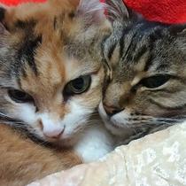小ペット(2匹まで)と 無料で同じお部屋でお泊りいただけます。当旅館にも犬と猫がおります。
