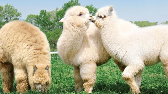<那須アルパカ牧場【入園券】付>日本初のアルパカ牧場!<「アリアデリ」洋食コース>