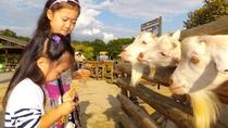 ◇【那須高原りんどう湖ファミリー牧場/当館より車で約20分】遊園地&牧場が集合したテーマパーク!
