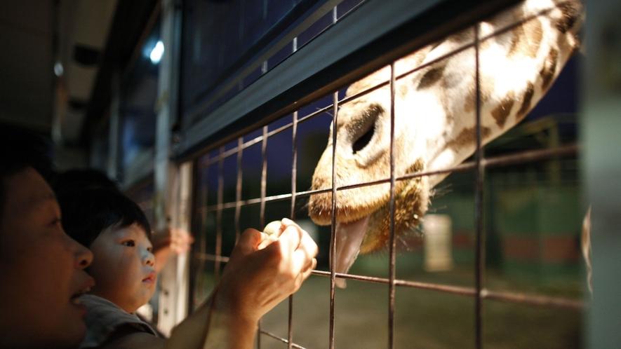 ◇【那須サファリパーク/当館より車で約10分】ナイトサファリでは夜行性の動物を間近で観察!