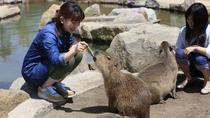 ◇【那須どうぶつ王国/当館より車で約30分】たくさんの動物たちを間近で触れ合おう!