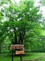 樹齢900年森の神様