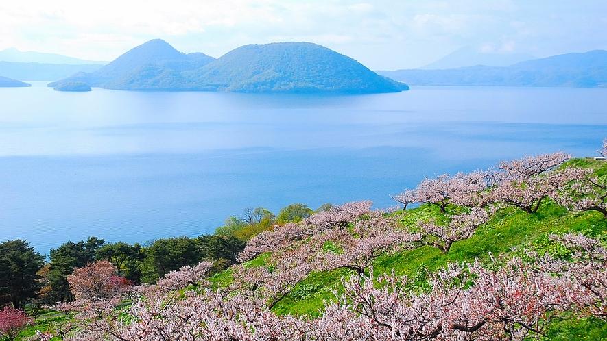 ★洞爺湖の春景色~梅公園のピンクに湖の青が映える絶景~