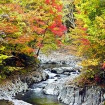 秋晴れ秋旅-中津川渓谷の紅葉