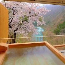 春~露天風呂付客室(ベッドタイプA)から満開の桜