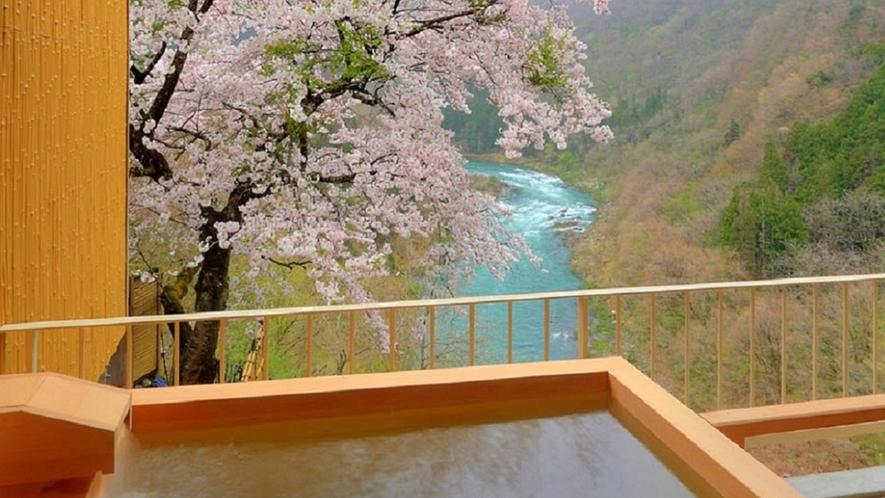 春~露天風呂付客室(和洋室A)から満開の桜
