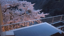 露天風呂付客室(301号室)から満開の桜