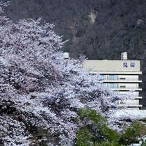 桜坂から望む丸峰