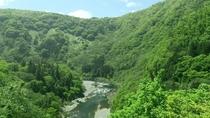 【露天風呂付客室/川音和室12畳/角部屋/青芭蕉】から、新緑の渓谷