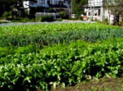 自家菜園2
