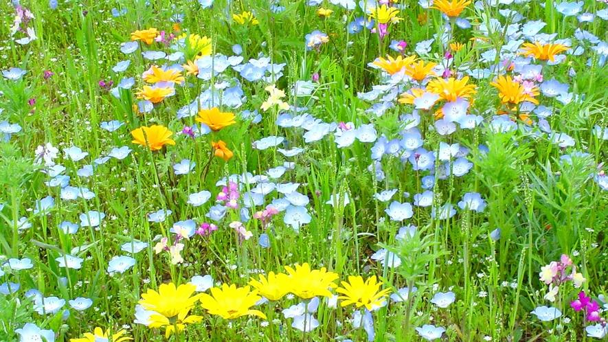 ・松崎花畑