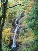「踊子歩道」の名も知れぬ滝
