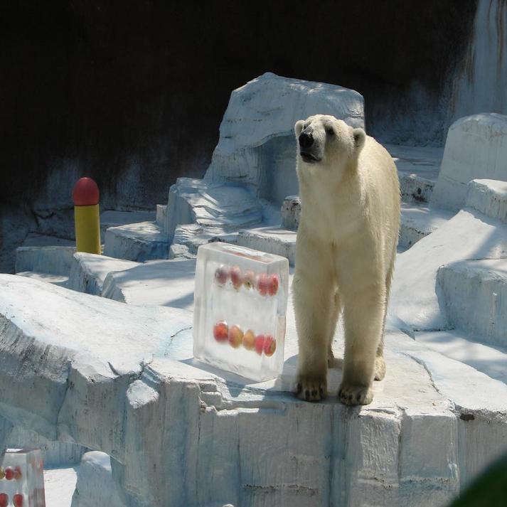 天王寺動物園の白くまです♪