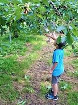 フルーツ狩り&食べ放題付宿泊プラン