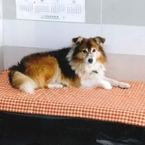 *【看板犬】2匹のわんこがいます。犬好きな方は遊んでね♪