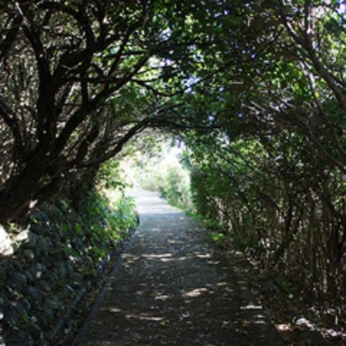 足摺岬遊歩道 木々のトンネル