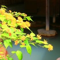 【温泉】貸切露天(もみじの湯)切露天の中で大きい浴槽です。新緑の木々を眺めながら。