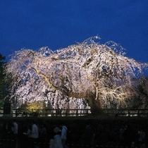 弘前城さくらまつり