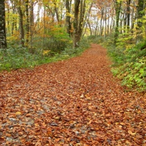 ブナの落ち葉の小路