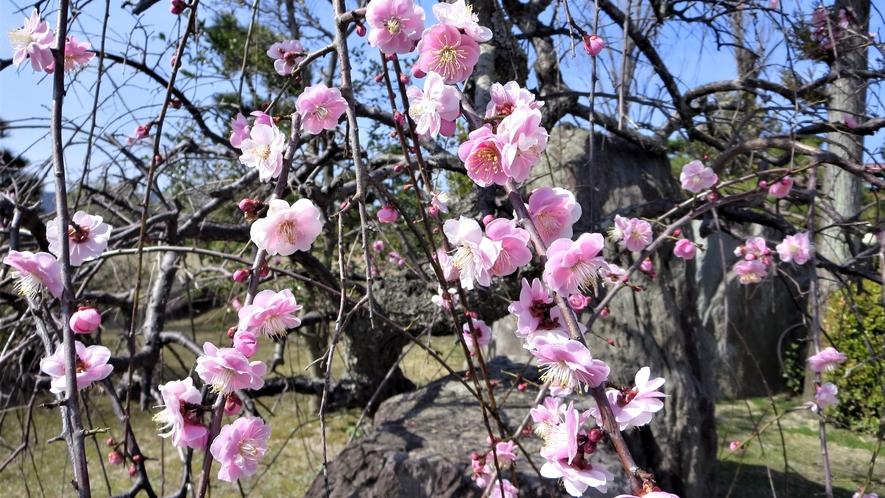 *【養生館庭園】古くから文豪達に愛された当館では庭園内に四季折々の花をお楽しみいただけます。