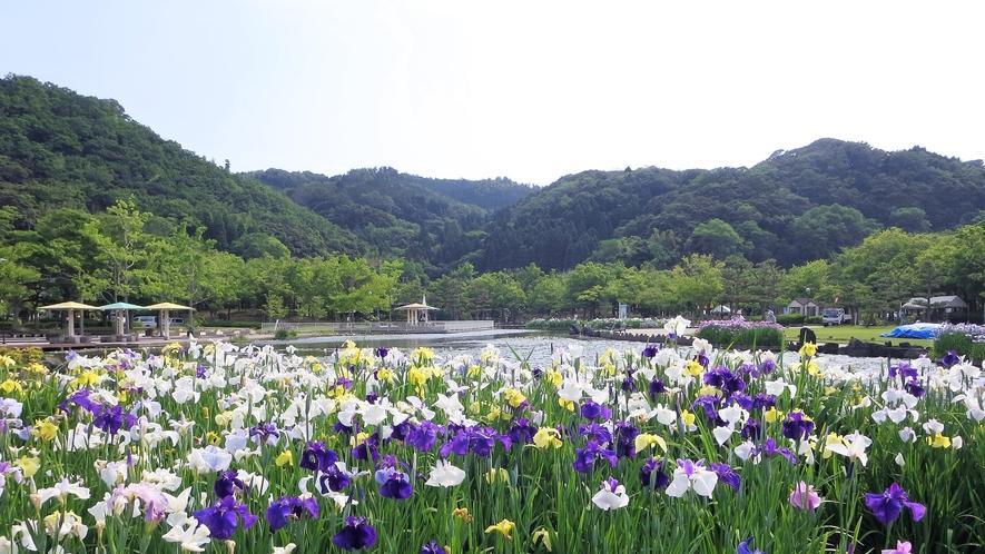 *【あやめ池公園】当館からお車で5分の季節の花々を楽しめるフォトスポットとしてオススメの公園です。