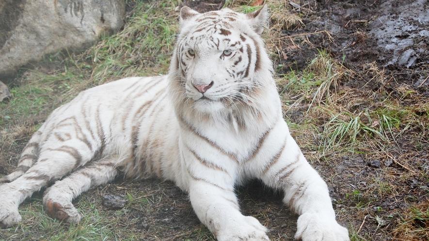 *[アニマルキングダム/車で約30分]伊豆半島最大の動物たちの楽園。
