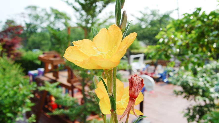 *[お庭]キッズパークでお子様を遊ばせながら、色とりどりのお花を鑑賞。