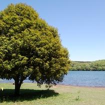*[一碧湖/車で5分]周囲4kmひょうたん型の美しい湖。湖畔でのんびりピクニックもおすすめ。