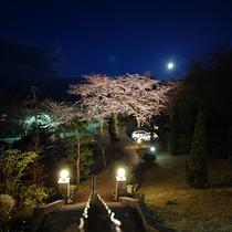 *[春の風景]夜はライトアップされた桜並木をご覧いただけます。