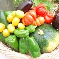 *[自家製野菜]自家菜園で育てた野菜もメニューに取り入れております。