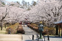 桜咲く聖光寺