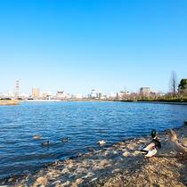 -千波湖-湖周辺にはたくさんの水鳥♪運が良ければ真っ白い雲のような白鳥が青空へ羽ばたく姿が見れますよ