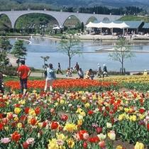 国営越後丘陵公園 季節ごとに様々な草花が咲きます。アスレッチックも楽しめます!(車で30分)