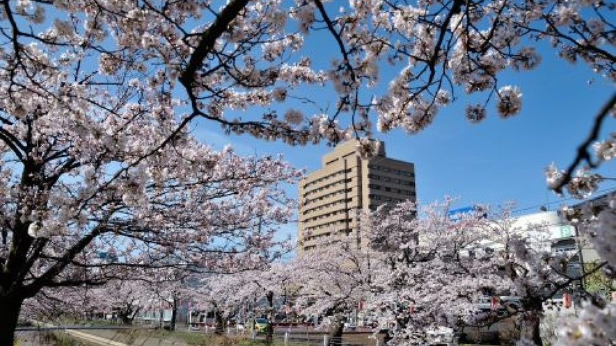 春には、近くの福島江の桜並木が満開に♪