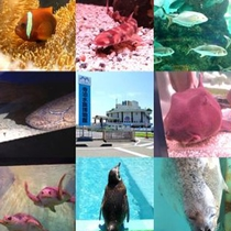 寺泊水族博物館 約400種類、1万匹もの魚が展示されています。(車で40分)