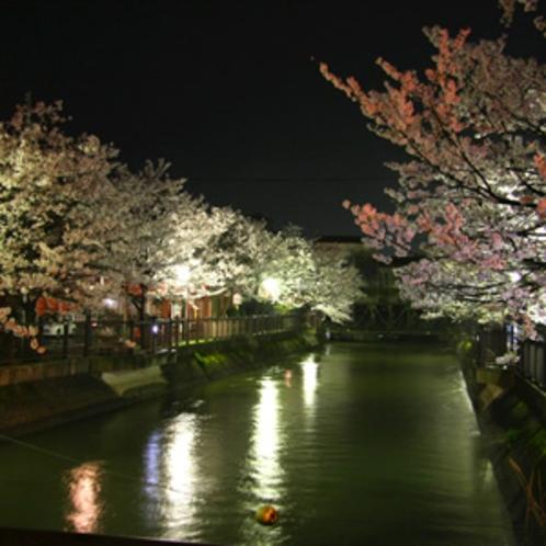 福島江の夜桜 ホテル目の前の「福島江」の桜並木♪長岡の隠れた桜の名所です。(徒歩2分)