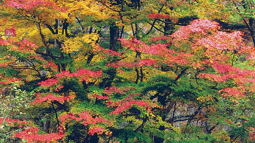 *[紅葉]秋は安曇野のいたるところで紅葉をご覧いただけます