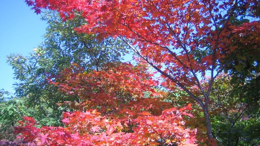 *≪秋の風景≫宿周辺も秋模様です。