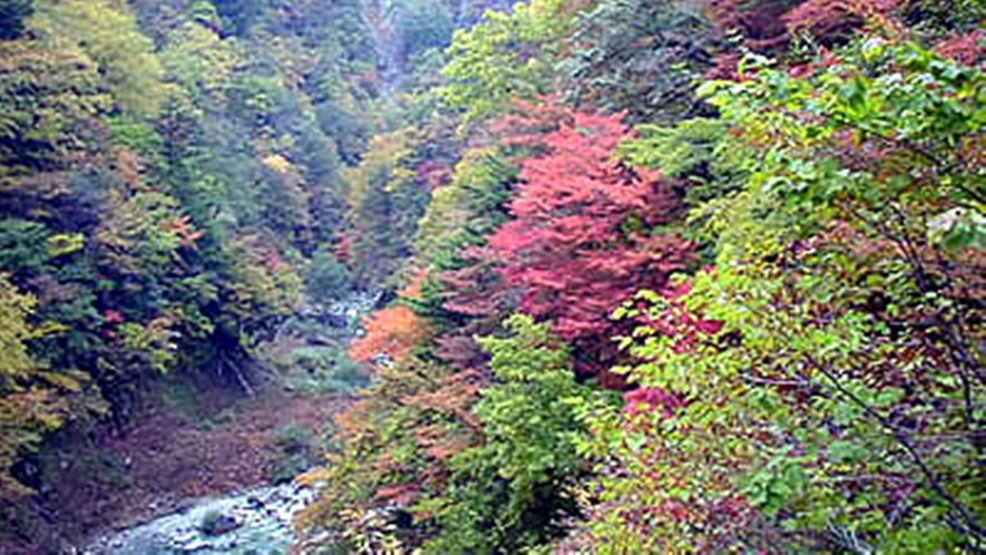 *≪高瀬渓谷≫紅葉の見頃は10月中旬~11月上旬です。