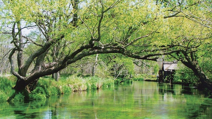 *[大王わさび農場]新緑に囲まれた清々しい水の流れと水車の風景