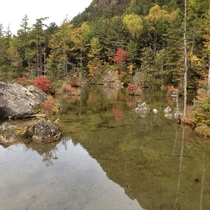 *≪上高地 明神池≫10月上旬~10月下旬が例年の紅葉の見頃です。