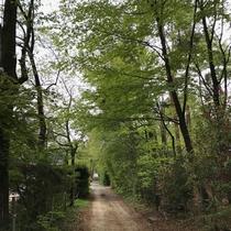 *新緑の小路/緑に囲まれた小路を散歩するだけでも気持ちがリフレッシュできます☆