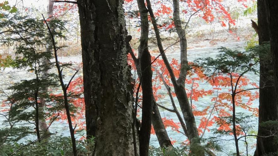 *【紅葉/周辺】上高地の紅葉。景勝地として名高い、飛騨山脈南部の梓川を散策してみませんか?